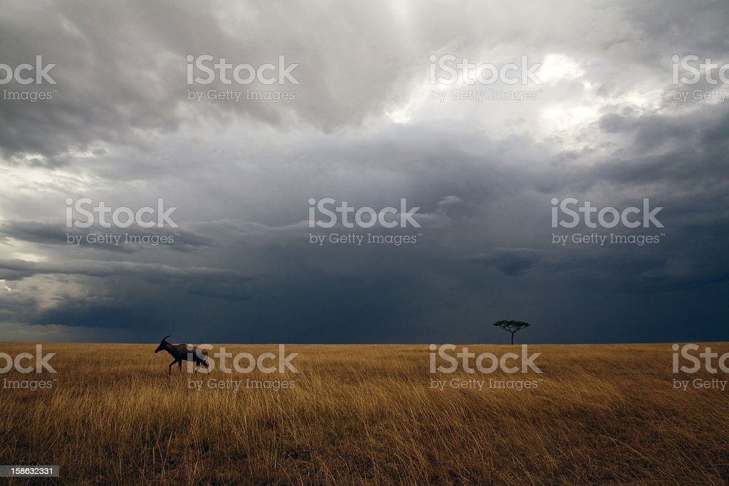 Masai Mara storm stock photo