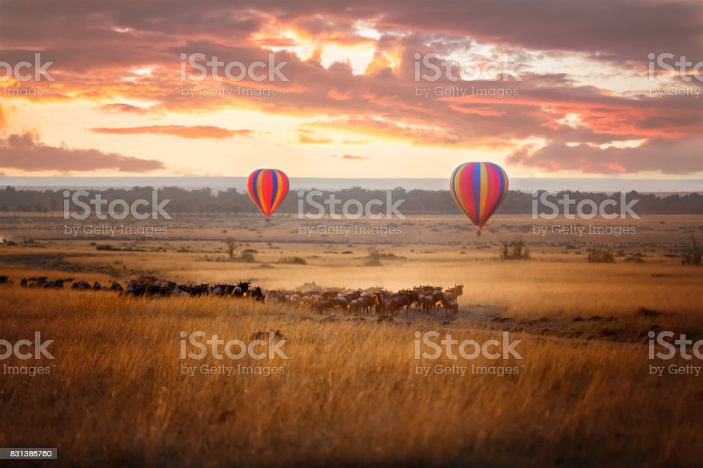 Masai Mara sunrise with wildebeest and balloons stock photo