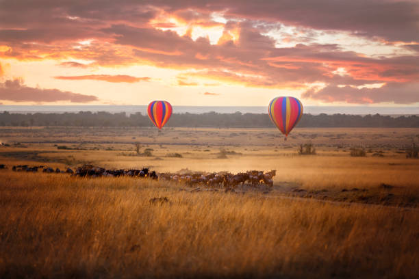 masai mara sunrise with wildebeest and balloons - safari stock photos and pictures