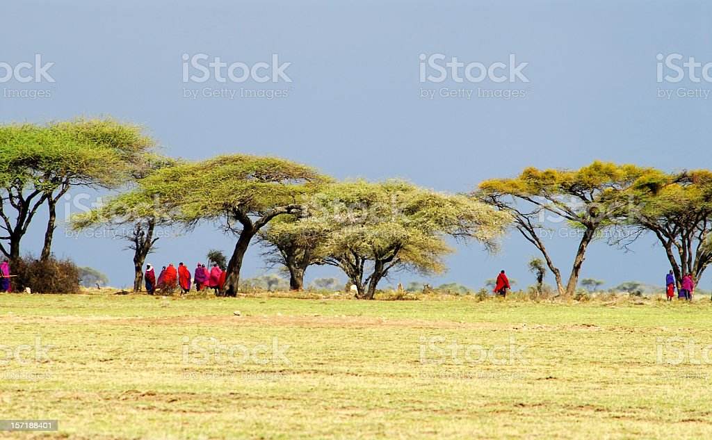 Masai warriors gathering under the acacia trees before a meeting stock photo