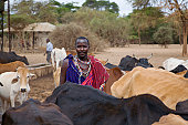 The decomposing carcasse of a cow that died due to a drought in Senegal, becoming a more severe problem each year in Western Africa in the course of climate change.