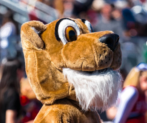 Mascot Head The head of a cougar mascot with the stands full behind it, at a high school football game on a sunny day in the fall. mascot stock pictures, royalty-free photos & images