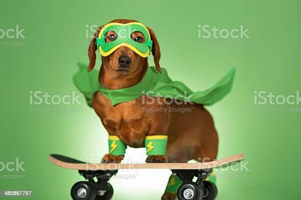 Masked superhero dog on a skateboard picture id485867757?b=1&k=6&m=485867757&s=612x612&h=kq8pvtq4gxcx4knxx3minh4lci5ji82vngibs9b qda=
