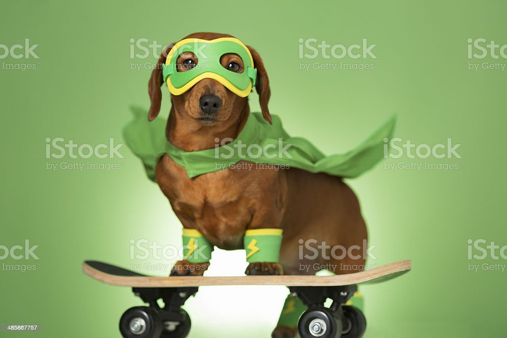 Masked superhero dog on a skateboard stock photo