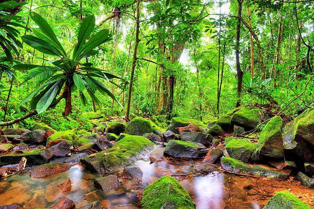 Masoala green jungle stock photo