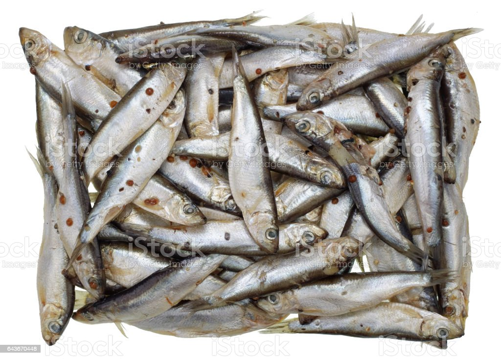 Mass grave of little silvery fishes concept. Heap of salty Baltic sprat. Isolated studio shot stock photo