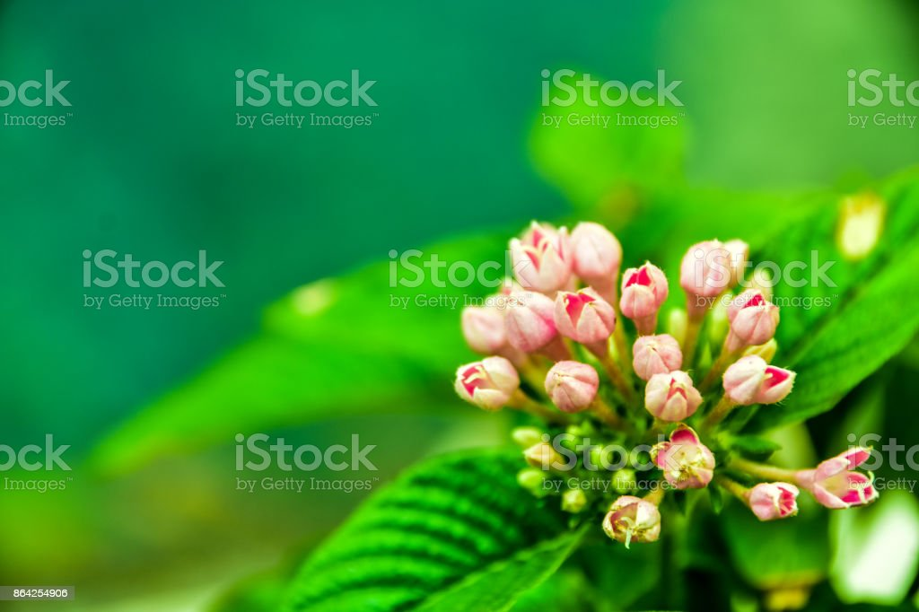 Mass Plant 3 royalty-free stock photo