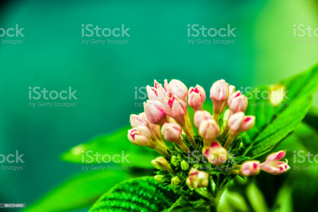 Mass Plant royalty-free stock photo