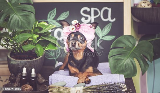 istock Massage and spa, a dog in a turban of a towel among the spa care items and plants. Funny concept grooming, washing and caring for animals 1130252396