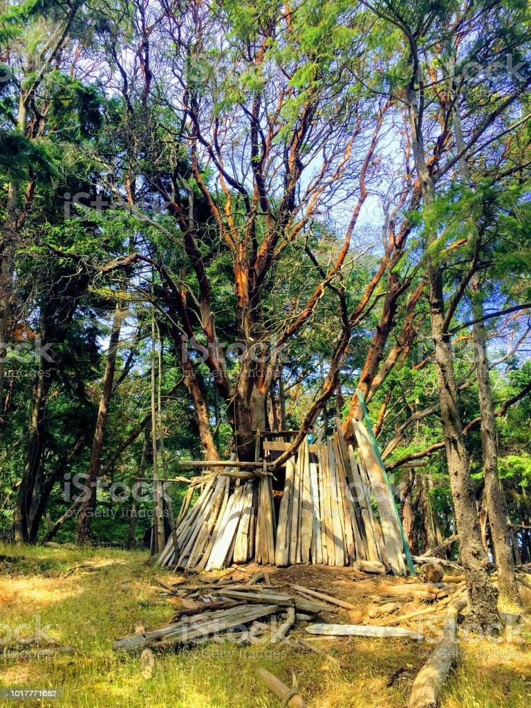 Árbol de madroño masiva albergando a un hombre hecho fuerte árbol construido de madera en las islas del Golfo, British Columbia, Vancouver - foto de stock