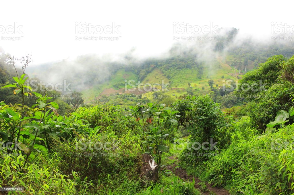 Massive rainforest and coffee plantations covered by mist and fog in close to the smaill town of Boquete, in Panama's western-most Province of Chiriquí - foto de acervo