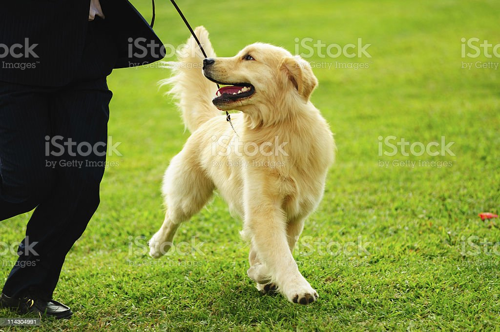 Master playing with his dog stock photo