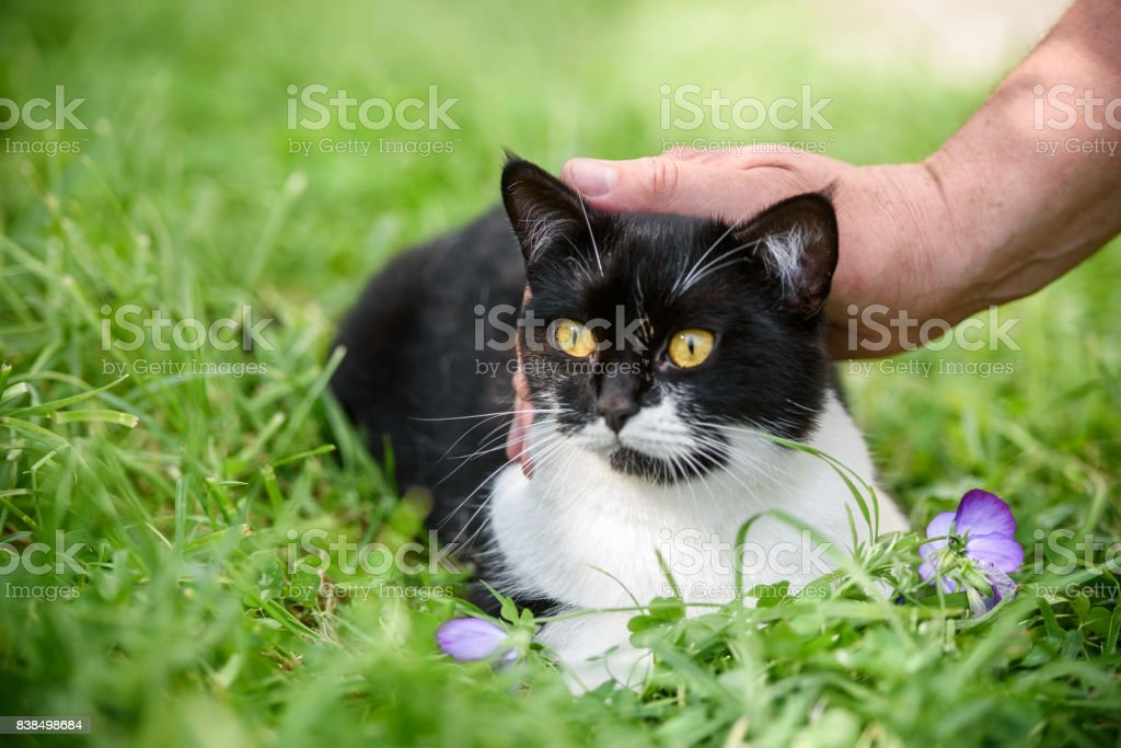 Master's hand stroking the cat in green grass stock photo