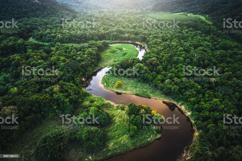 Mata Atlantica - Atlantic Forest in Brazil stock photo