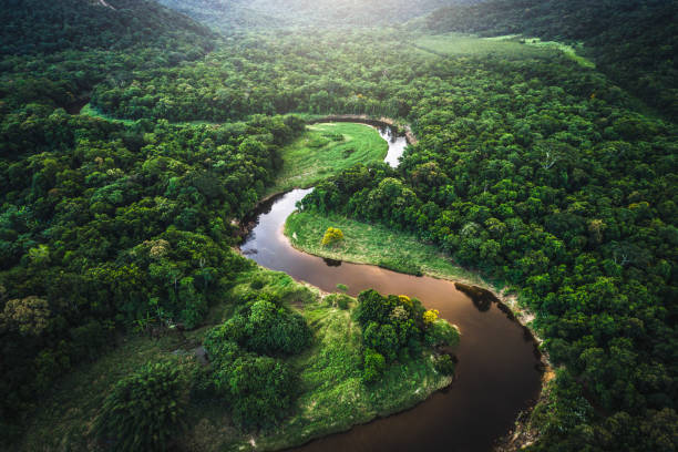 mata atlantica - atlantic forest in brazil - river stock photos and pictures