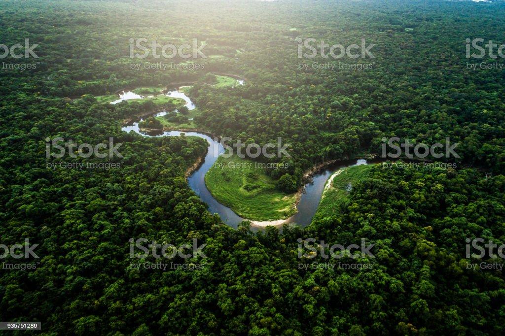 Mata Atlantica - Atlantic Forest in Brazil stock photo