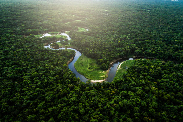 Mata Atlantica - Atlantic Forest in Brazil Drone Footage amazon river stock pictures, royalty-free photos & images