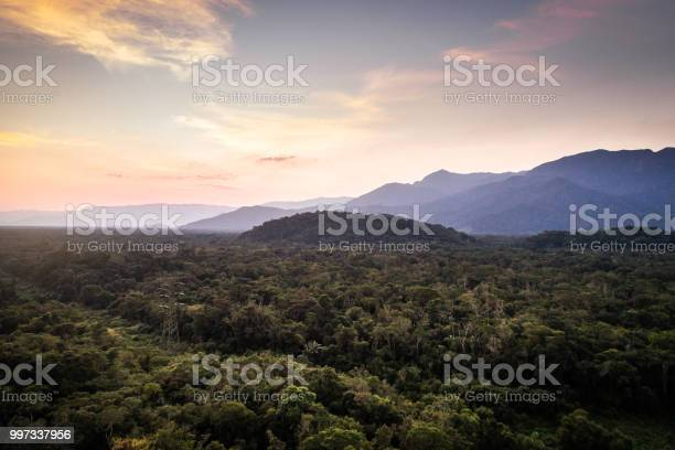 Photo of Mata Atlantica - Atlantic Forest in Brazil