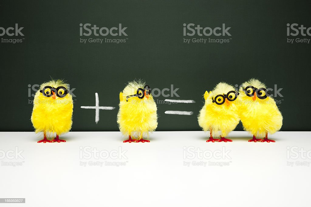 Math Lesson - Nerd  Chick Chicken Humor Fun Mathematics Easter stock photo