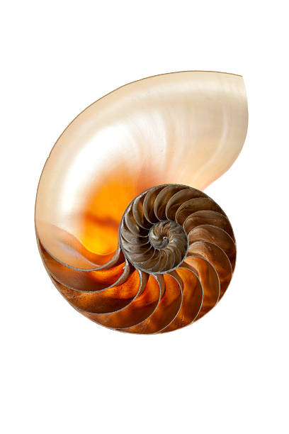 mathematics and the aesthetic - nautilus stock pictures, royalty-free photos & images