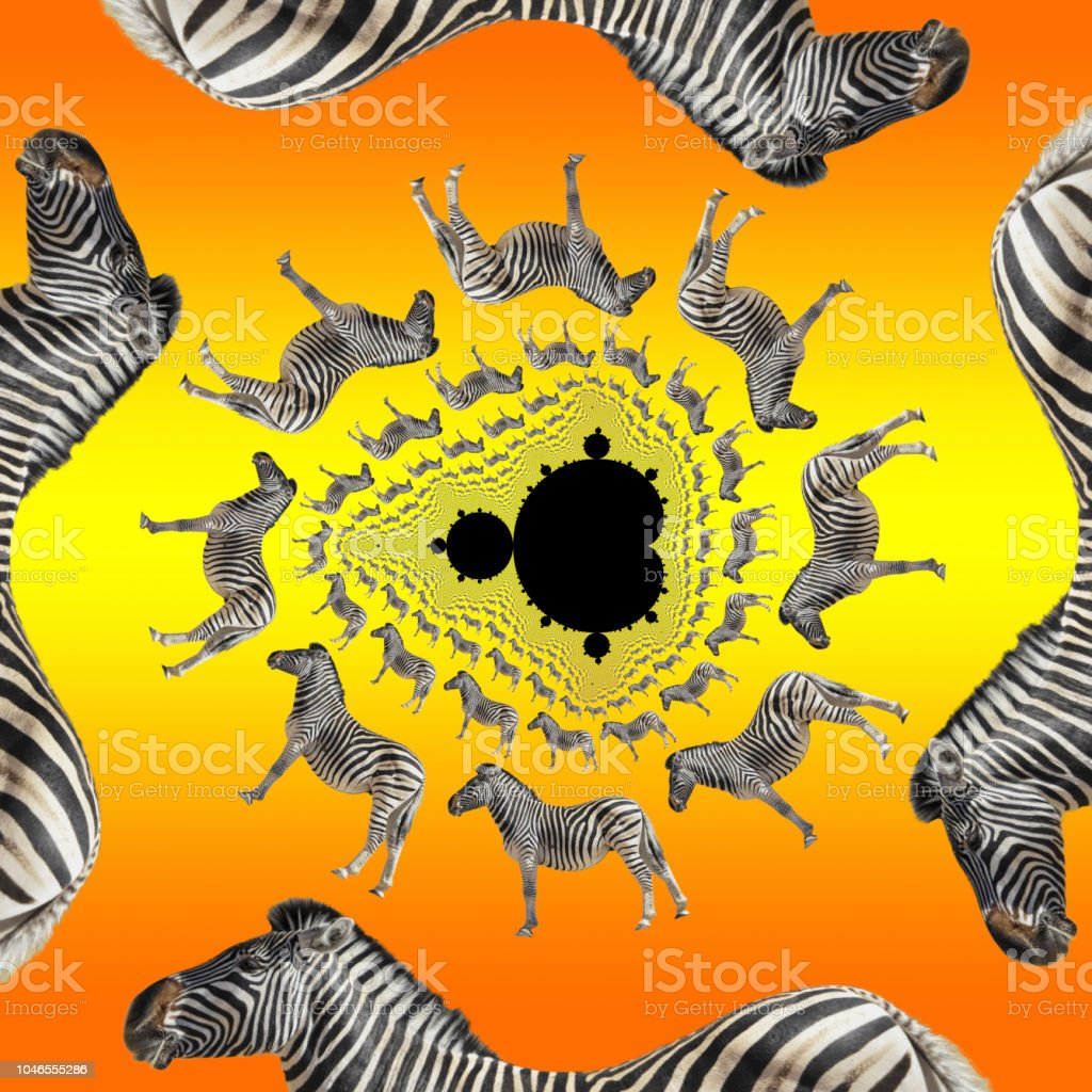 Mathematics and zebras collide in fractal decomposition stock photo
