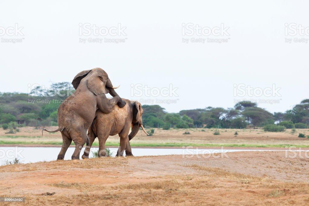 Erotic stories elephants