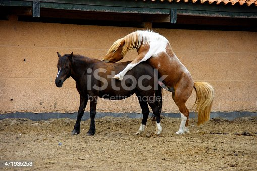 Two horses take care for the future