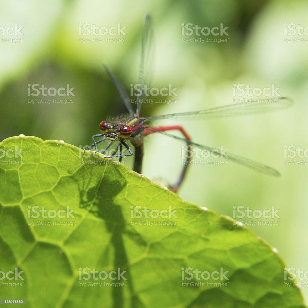 Mating stock photo