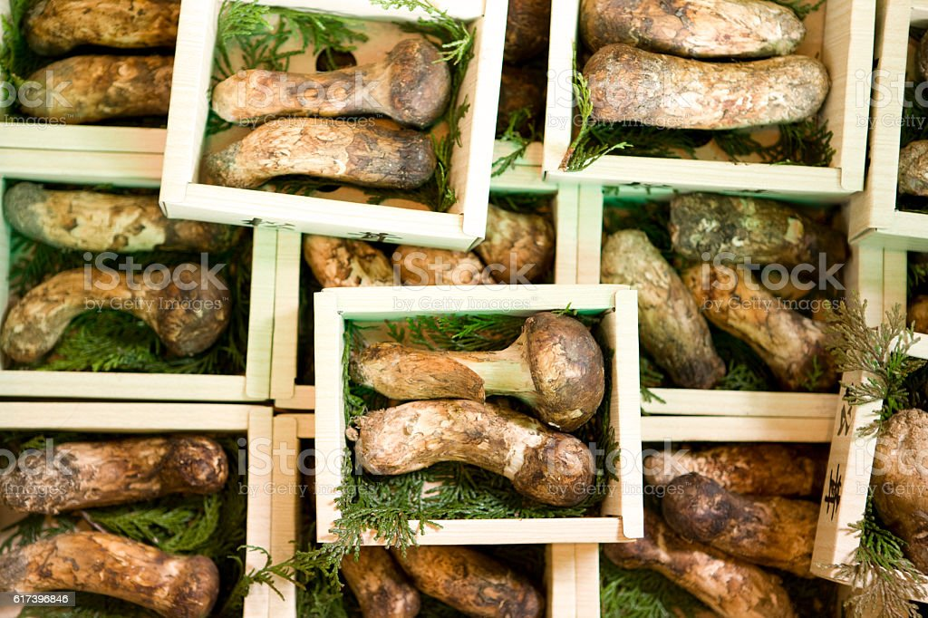 Matsutake in a box stock photo
