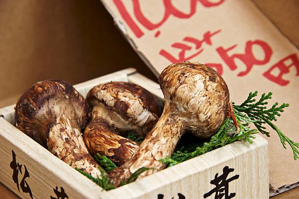 松茸マッシュルーム(パインキノコ) - 松茸 ストックフォトと画像