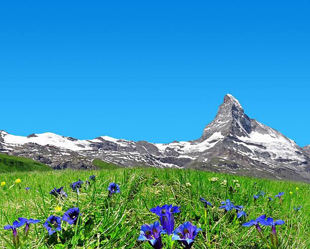 matterhorn in pennine alps, switzerland - gentiaan stockfoto's en -beelden