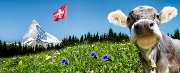 Matterhorn Matterhorn with cow and Flag switzerland stock pictures, royalty-free photos & images