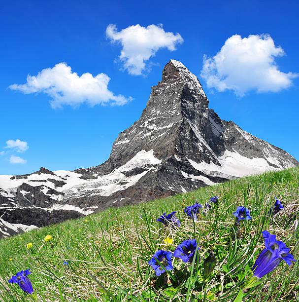 Matterhorn Matterhorn in the foreground blooming gentian, Pennine Alps, Switzerland swiss alps stock pictures, royalty-free photos & images