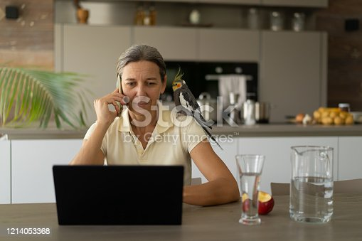 front view medium shot mature adult woman sitting at table in livingroom, kitchen of modern european house, working at laptop notebook during covid 19 crisis, with a little smile talking at mobile phone smartphone, her cute bird cockatiel pet sitting on her shoulder