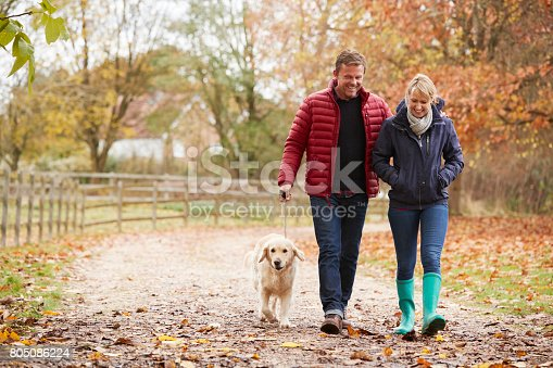 istock Mature Couple On Autumn Walk With Labrador 805086224