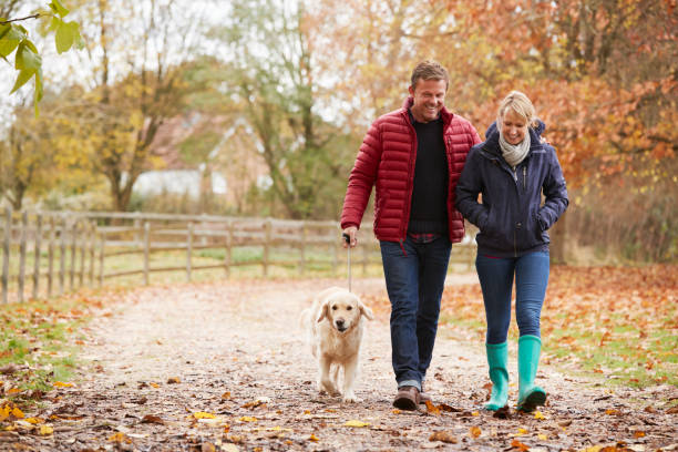 Mature Couple On Autumn Walk With Labrador stock photo