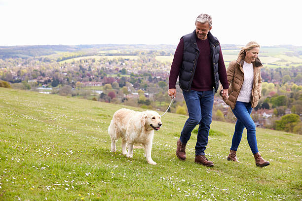 mature couple taking golden retriever for walk - erwachsener über 40 stock-fotos und bilder