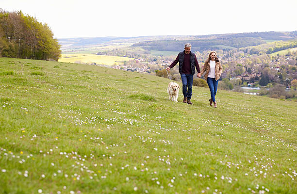 mature couple taking golden retriever for walk - rural lifestyle stock photos and pictures