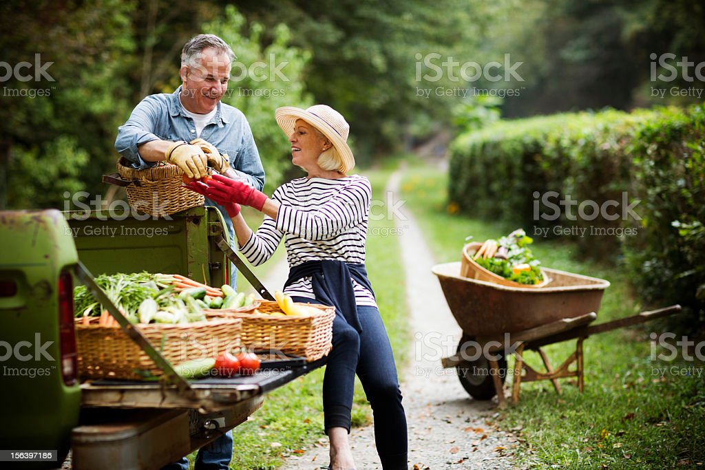 Mature Couple With Harvested Vegetables In Garden. royalty-free stock photo
