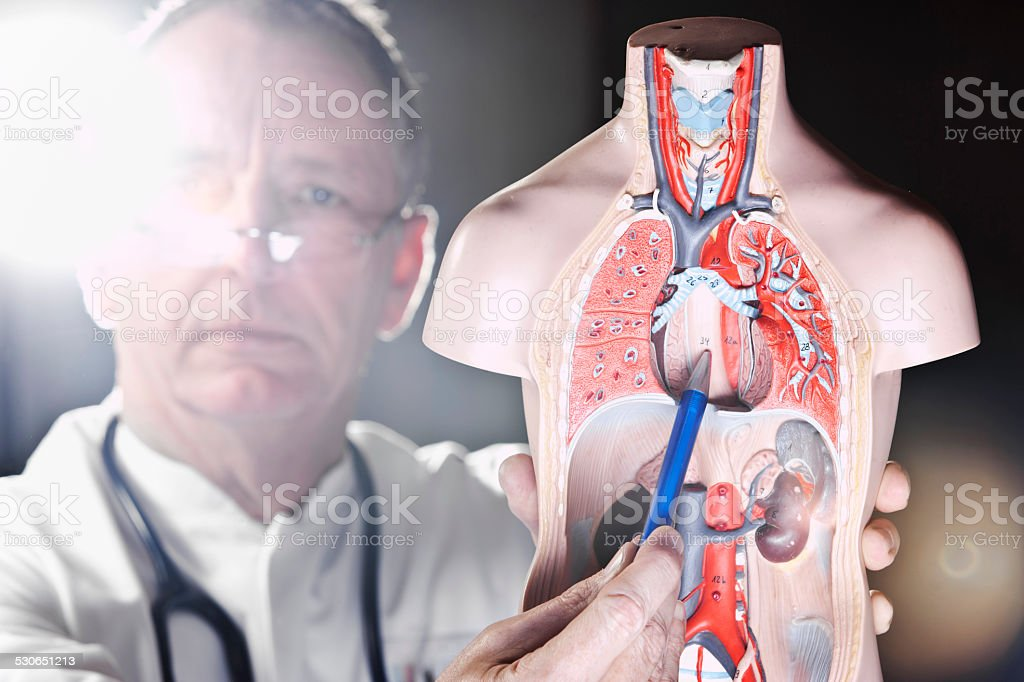Mature doctor pointing at oesophagus stock photo