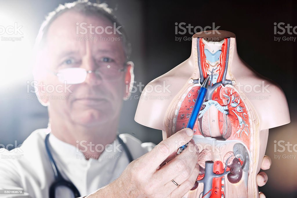 Mature doctor pointing at thyroid gland stock photo