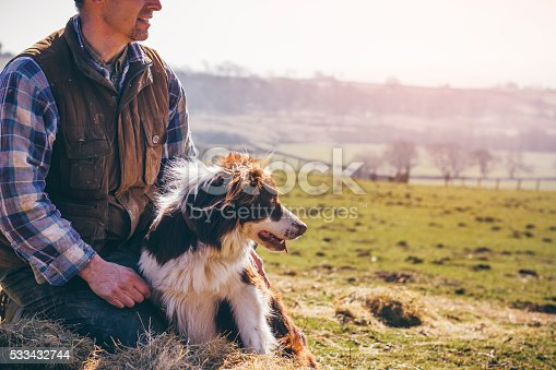 Mature farmer and his sheepdog sitting on a pile of hay. They are both looking across the field and surrounding farmland.