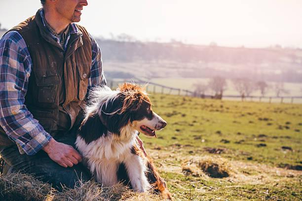 Maduro agricultor y su perro pastor - foto de stock