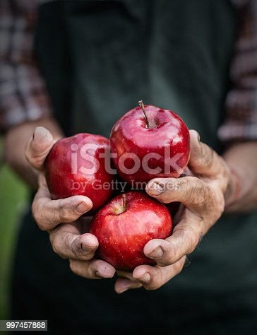Mature farmer holding red apples