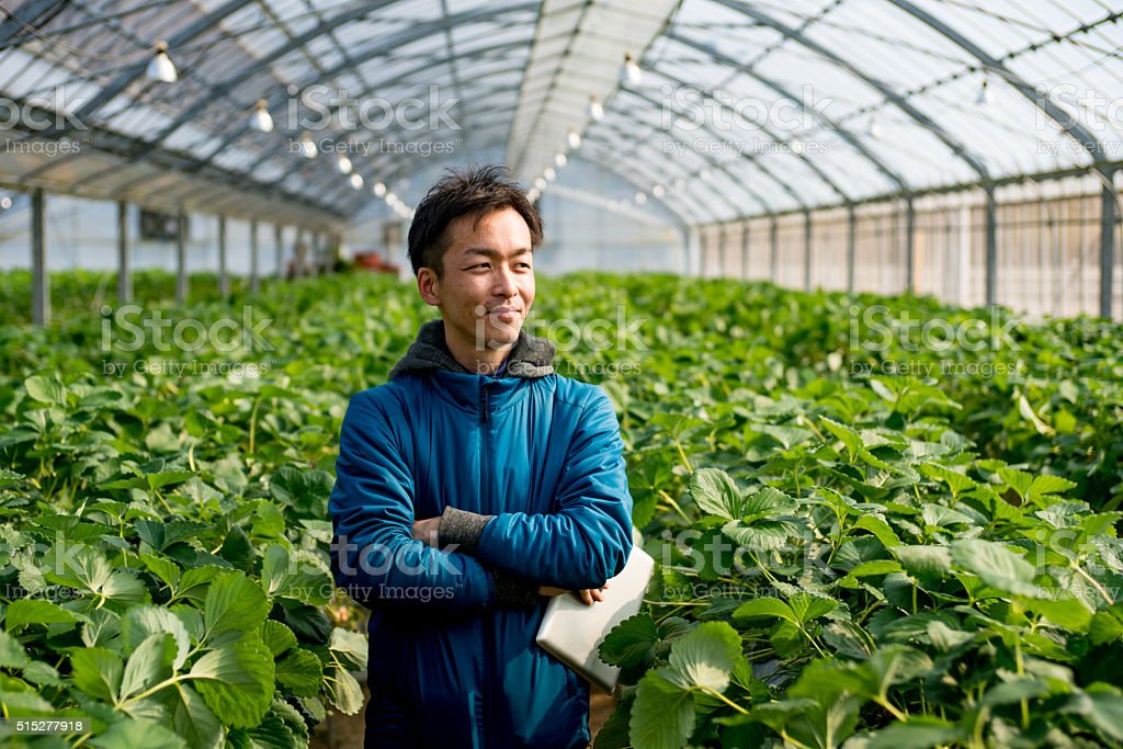 Mature farmer with a tablet computer in a greenhouse stock photo