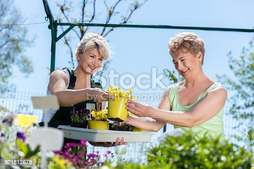 istock Mature gardener helps senior client with flowers 921812678