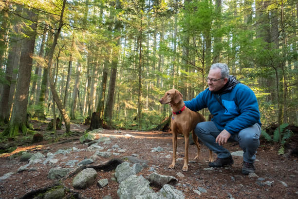 mature hiking man holding vizsla dog in sunlit forest - active lifestyle stock pictures, royalty-free photos & images