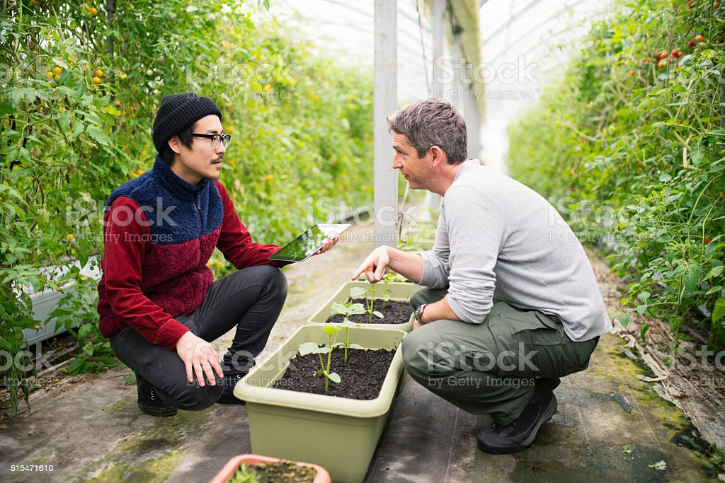 Mature male farmers using a digital tablet stock photo