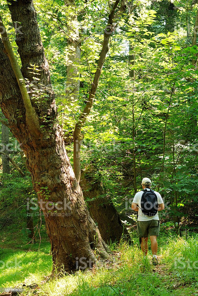 Mature male hiker with backpack in wooded area royalty-free stock photo