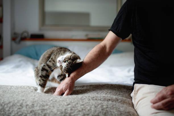Mature man and his cat picture id1045571046?b=1&k=6&m=1045571046&s=612x612&w=0&h=lknsywffq ji 1x v4a7zs6l5dm4uk6loyukekm2s2a=